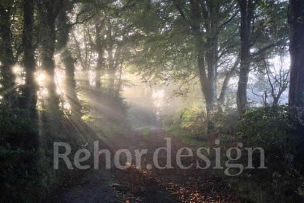 Waldstimmung Digosville Normandie